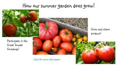 TomatoGarden2.jpg