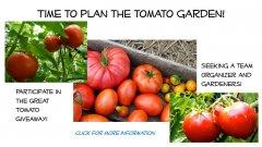 TomatoGarden1.jpg